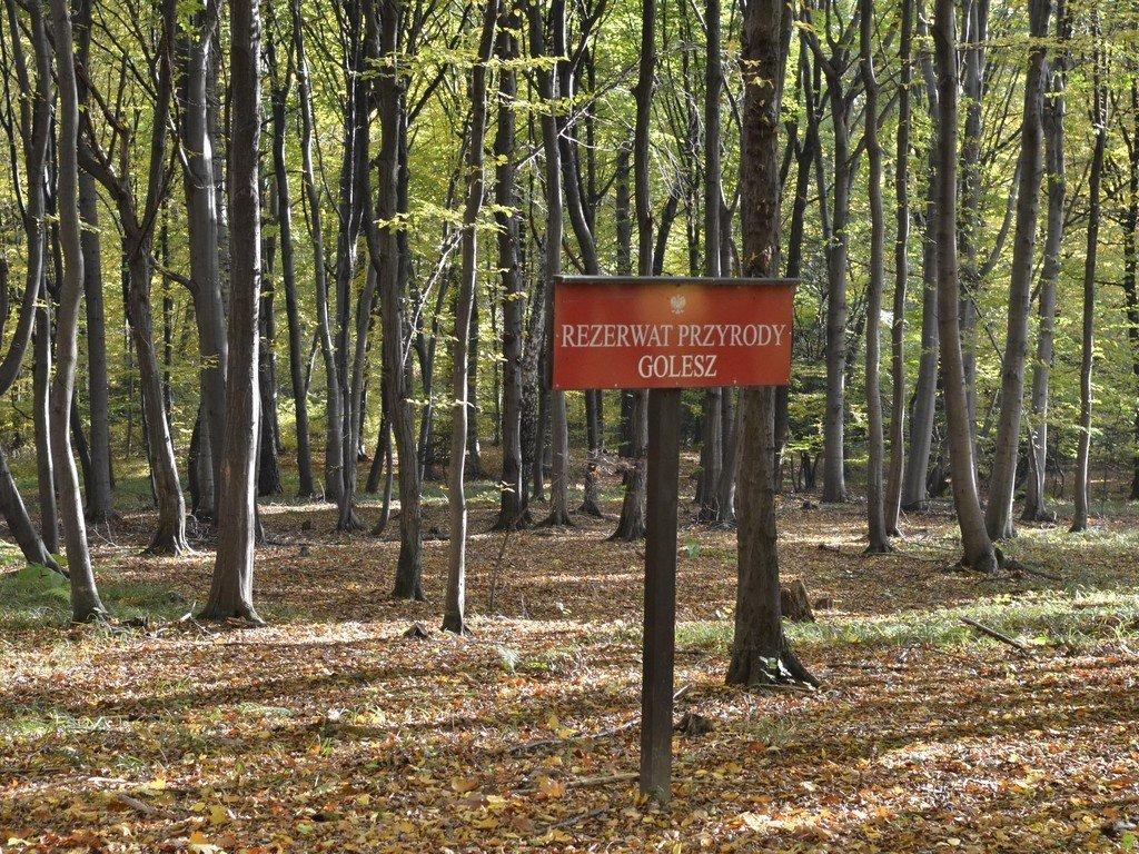 Read more about the article Rezerwat Golesz jesienią