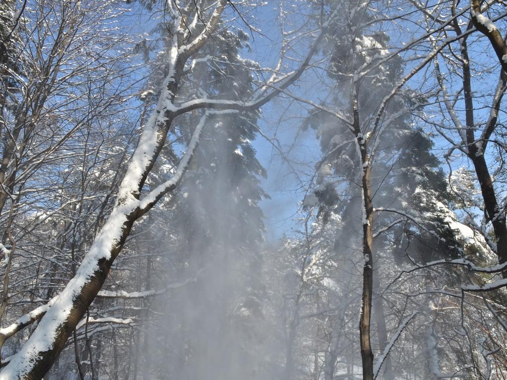 Read more about the article Rezerwat Golesz zimą