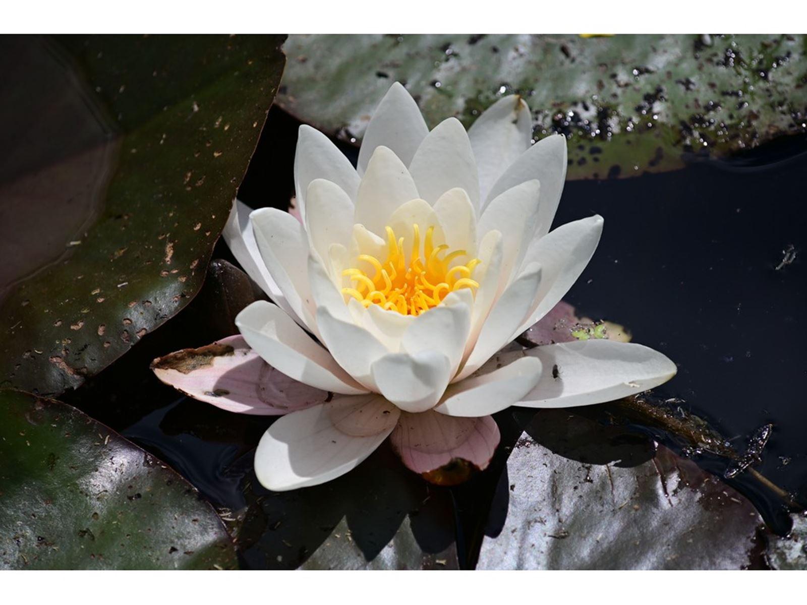 Read more about the article Ogród Botaniczny Myślęcinek